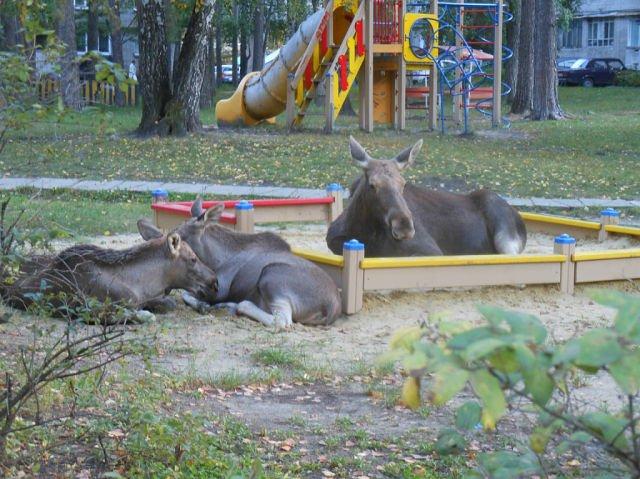 Мама с детьми на детской площадке